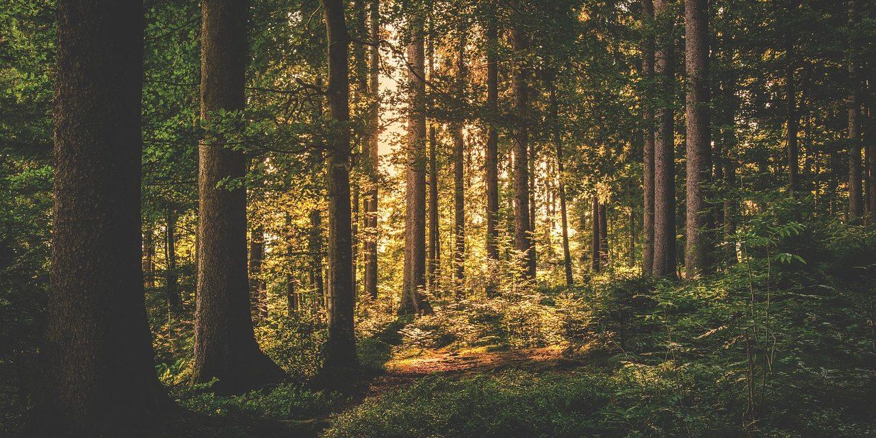 Omezený vstup do lesa